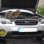 Feux antibrouillard Subaru Rex
